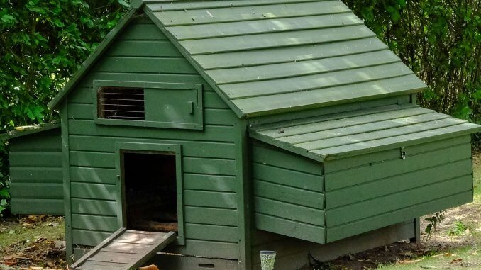 5 Best Automatic Chicken Coop Door The Complete Buyer's Guide Cover