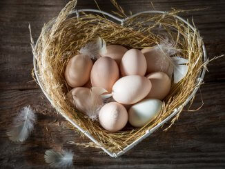 What Color Eggs Can Chickens Lay? The Complete Guide Cover