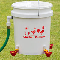 Chicken Culture's Automatic Kit