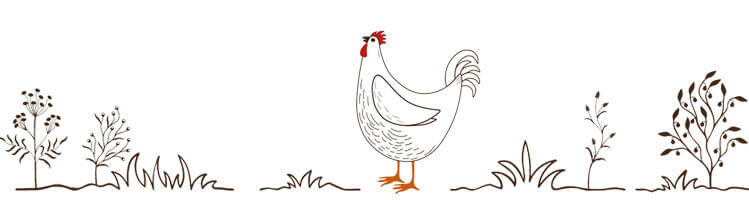 Chapter 2 How To Pick The Perfect Chicken Breed