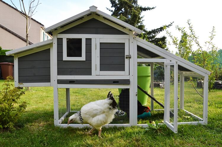 Ideal Chicken Coop Size