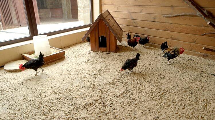 Sand Inside Chicken Coop