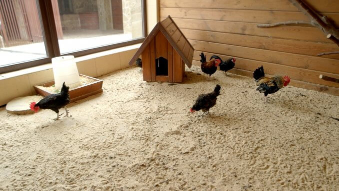 Using Sand As Coop Bedding The Complete Guide Cover