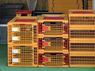 5 Best Chicken and Poultry Crates The Complete Guide Cover
